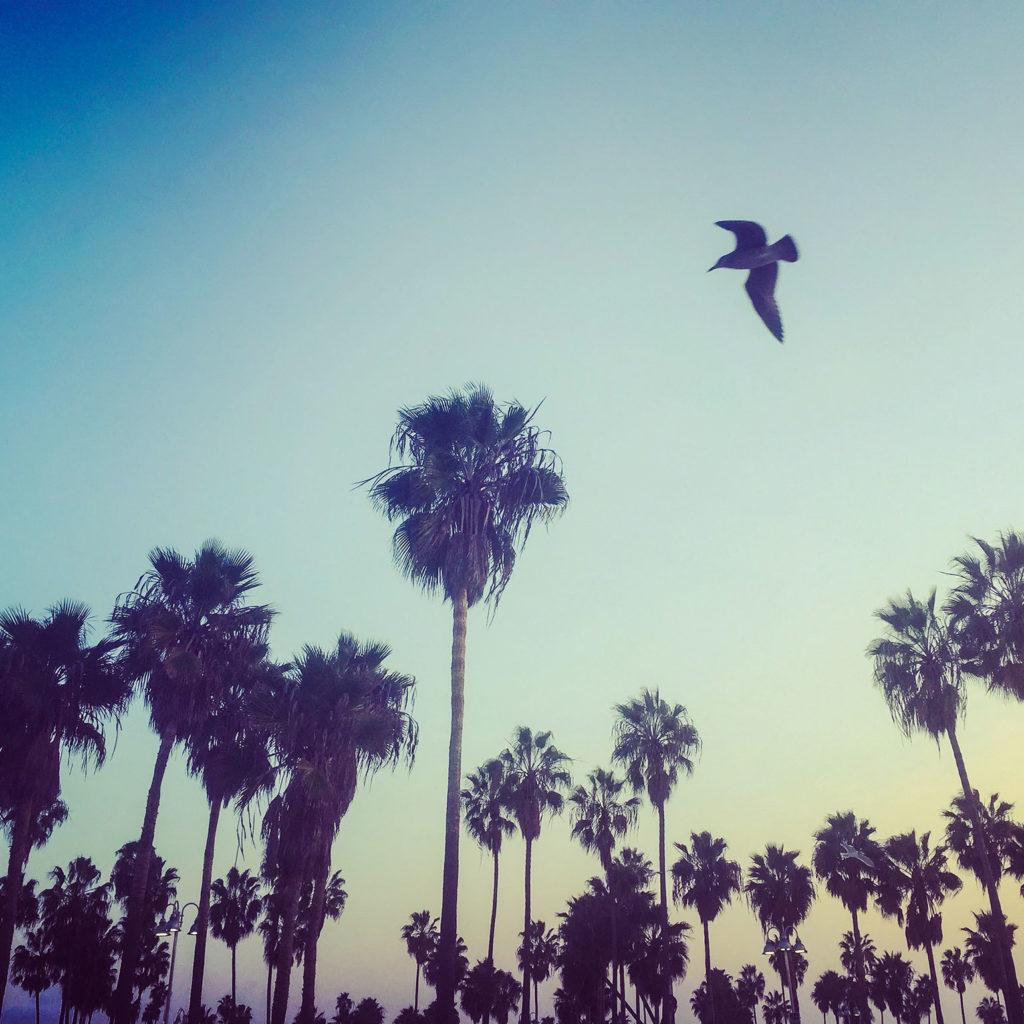 Fabulous Weekend Links- Santa Monica Sunset