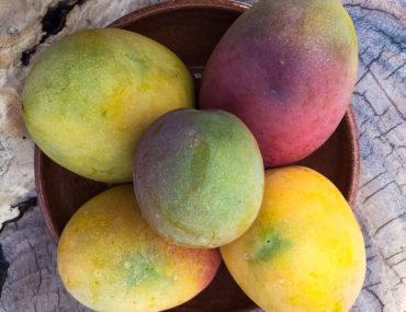 Mangoes in Nicaragua - Weekend Reading