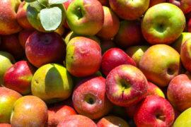 Apple Pile- Happy Weekend